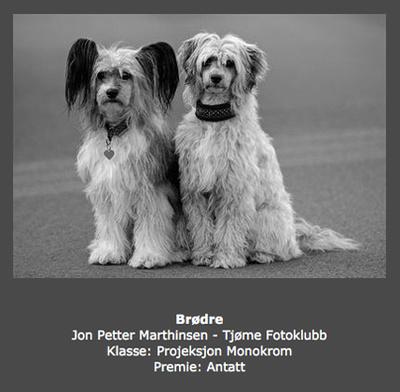 Høst 2013 - Brødre (Jon Petter Marthinsen)