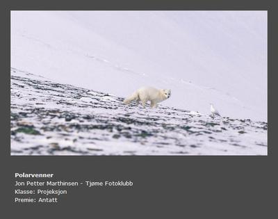 Høst 2015 - Tittel: Polarvenner